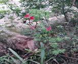 Flores e Vegetação
